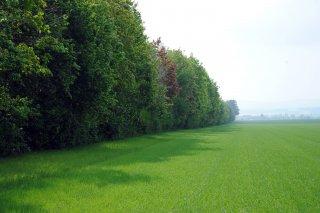 Biokoridory a biocentra