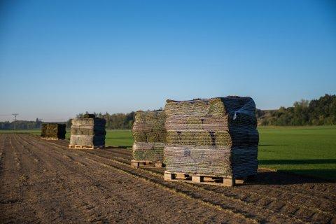 Pěstování travních koberců