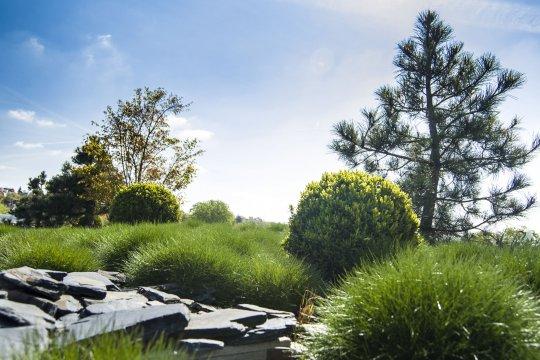 Střešní zahrada Essens