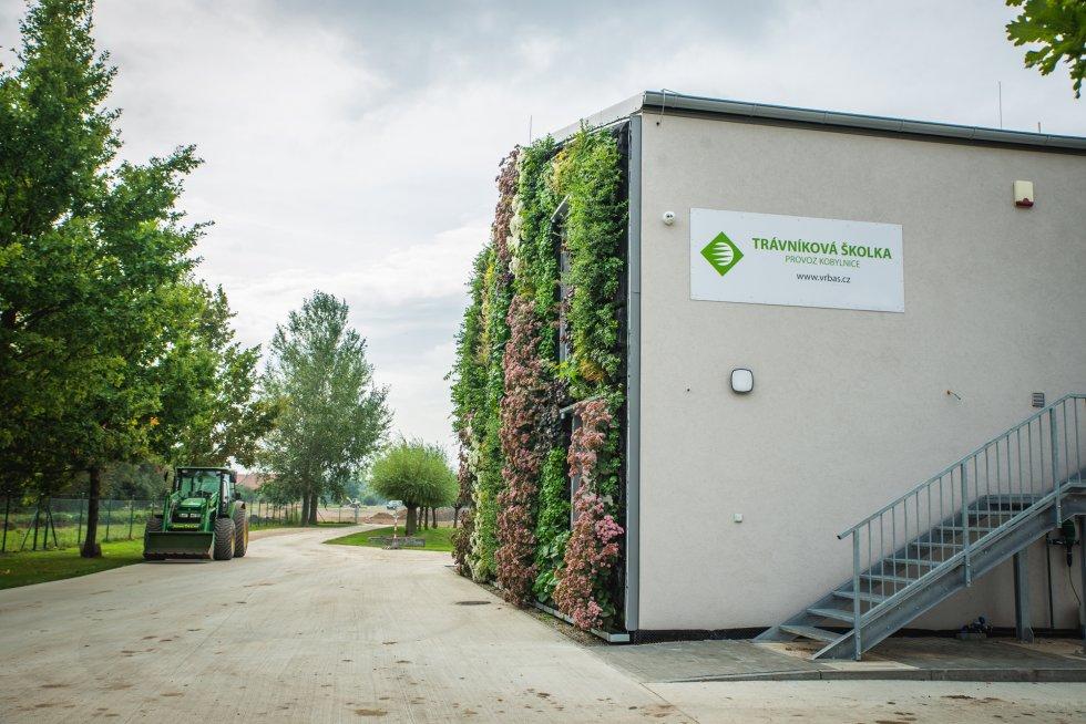 Zelená stěna v Kobylnicích